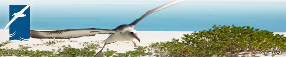Laysan_Albatross_by_James-Lloyd_banner.jpg
