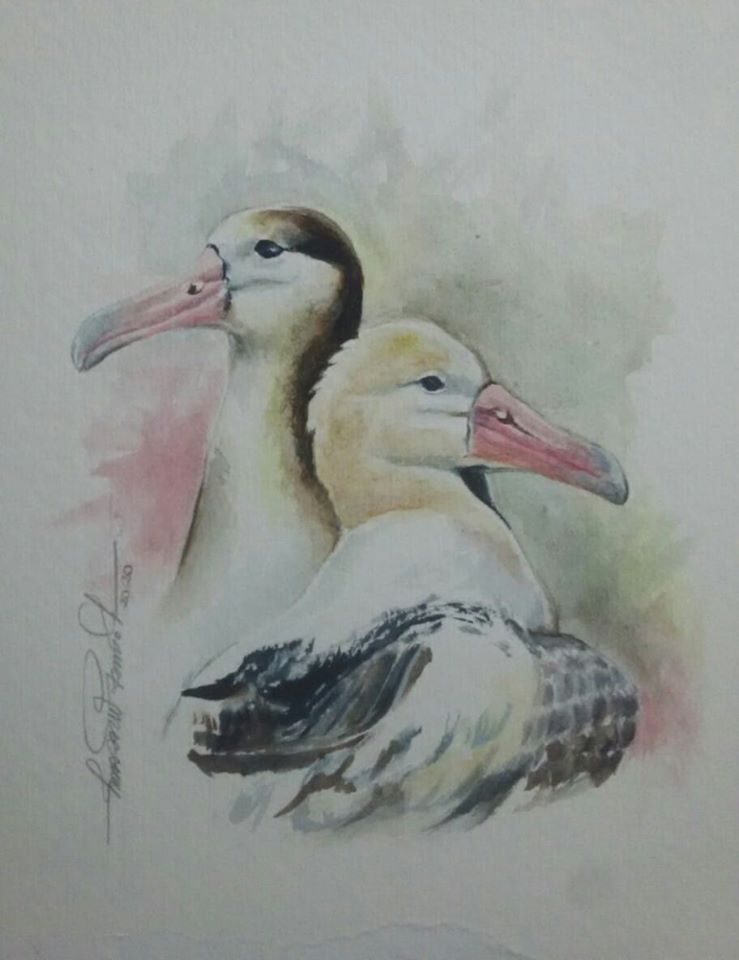 Short tailed Albatross Laurie Johnson Lucimara Wesolowicz