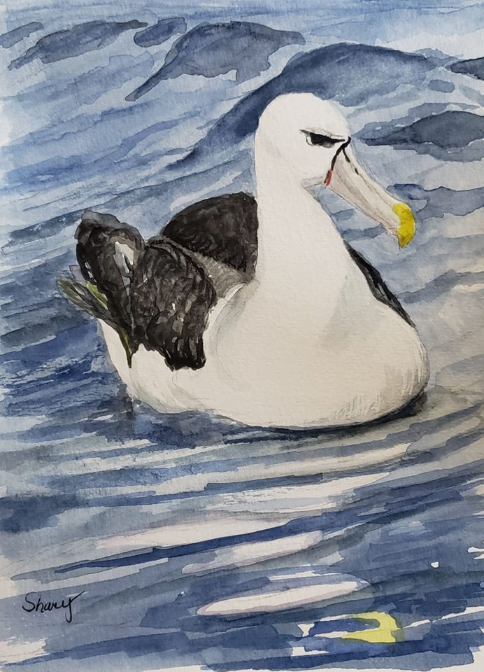 White capped Albatross Laurie Johnson Shary Page Weckwerth