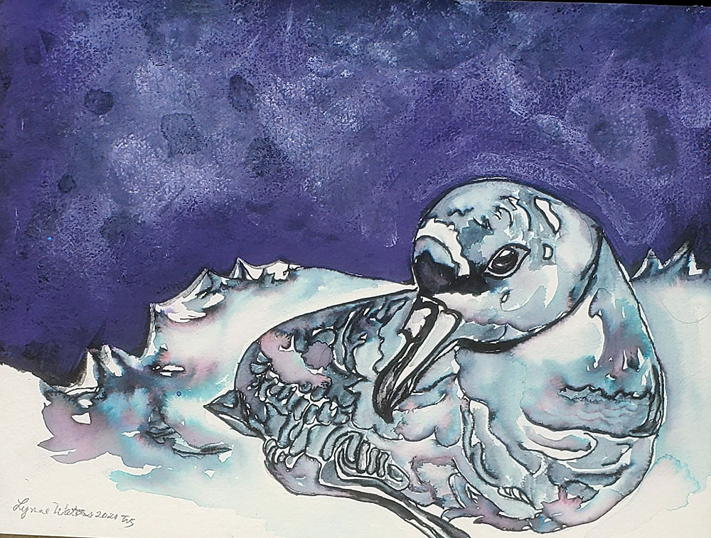 LynneWaters Spectacled Petrel watercolour Peter Ryan