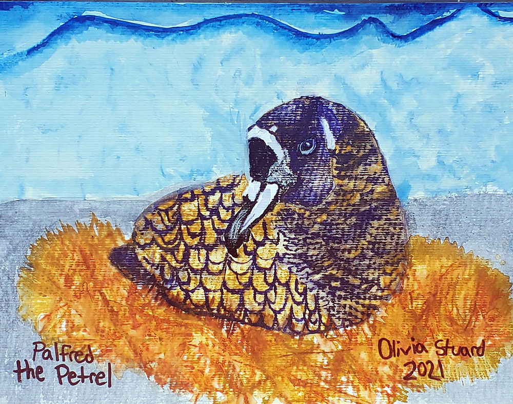 Olivia Stuard 11 yrs Inktense watercolour Spectacled Petrel Peter Ryan