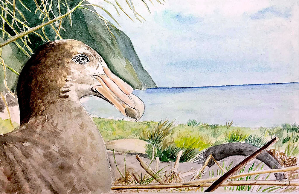 Susanne Durchholz Southern Giant Petrel watercolour Michelle Risi Long Beach Gough