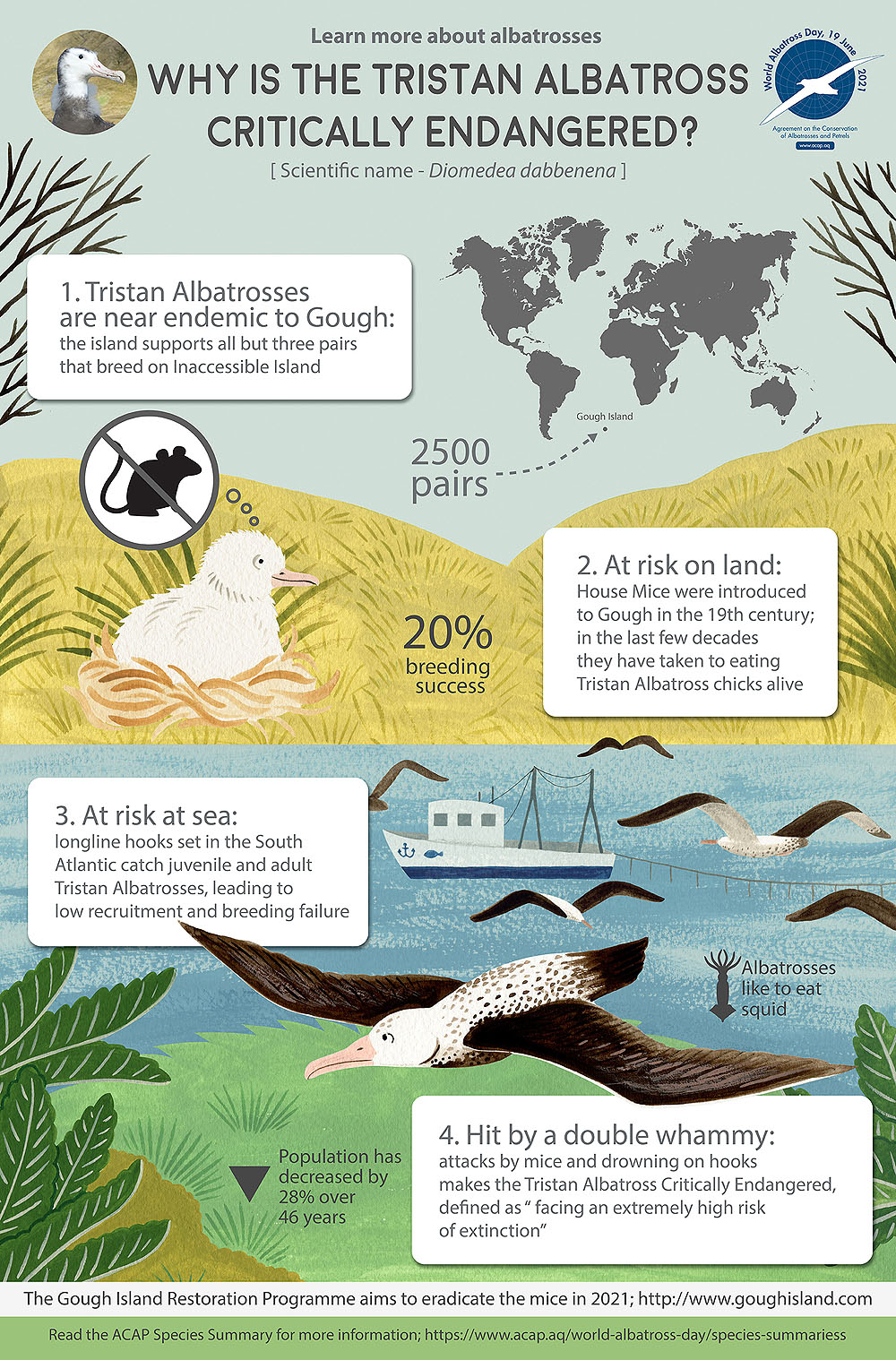 Tristan Albatross infographic colour