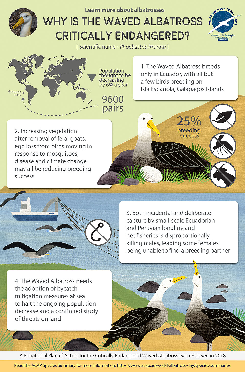 Waved Albatross infographic colour