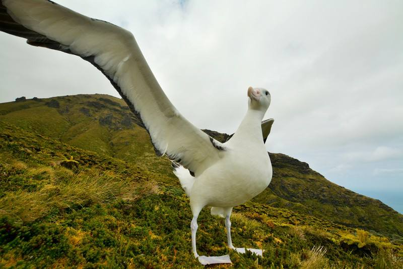 Tristan Albatross 3 Tom McSherry