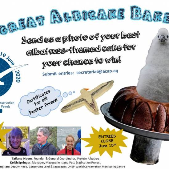 Announcing a World Albatross Day competition: The  Great Albicake Bake Off