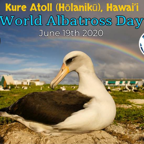 Hawaii's Kure Atoll advertises World Albatross Day with a 'virtual banner'