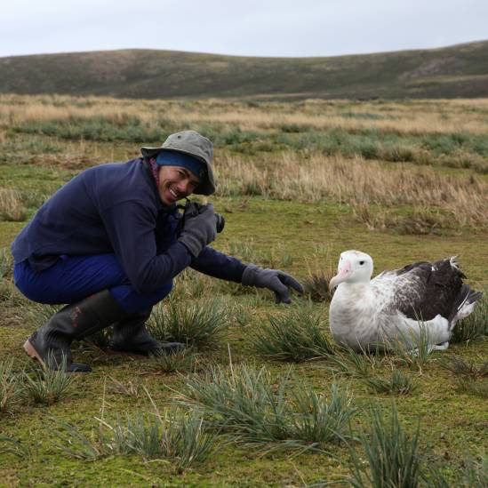 Understanding moult patterns in albatrosses and petrels breeding on Marion and Gough Islands: MSc awarded to Alexis Osborne