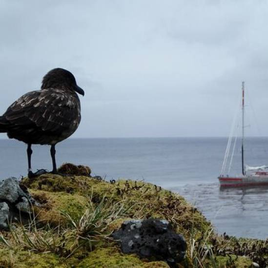 Defeating  COVID-19.  Albatross researchers sail for sub-Antarctic Marion Island on a yacht