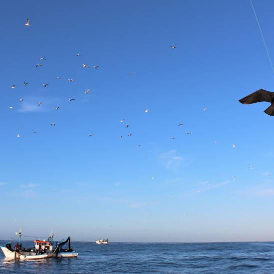 Reducing seabird bycatch in Portuguese fisheries with a bird-scaring kite
