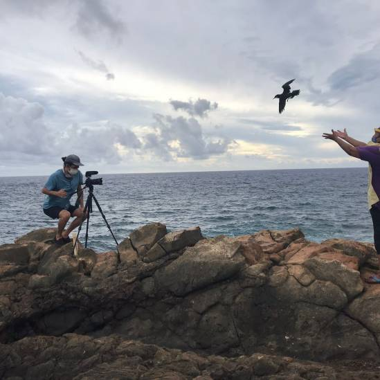 Releasing downed Newell's Shearwaters in the time of a pandemic