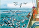 FS 12 Demersal & Pelagic Longline: Haul mitigation