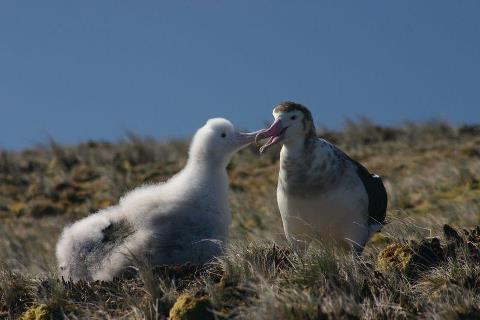 Colouring in Amsterdam Albatross Diane Andersen