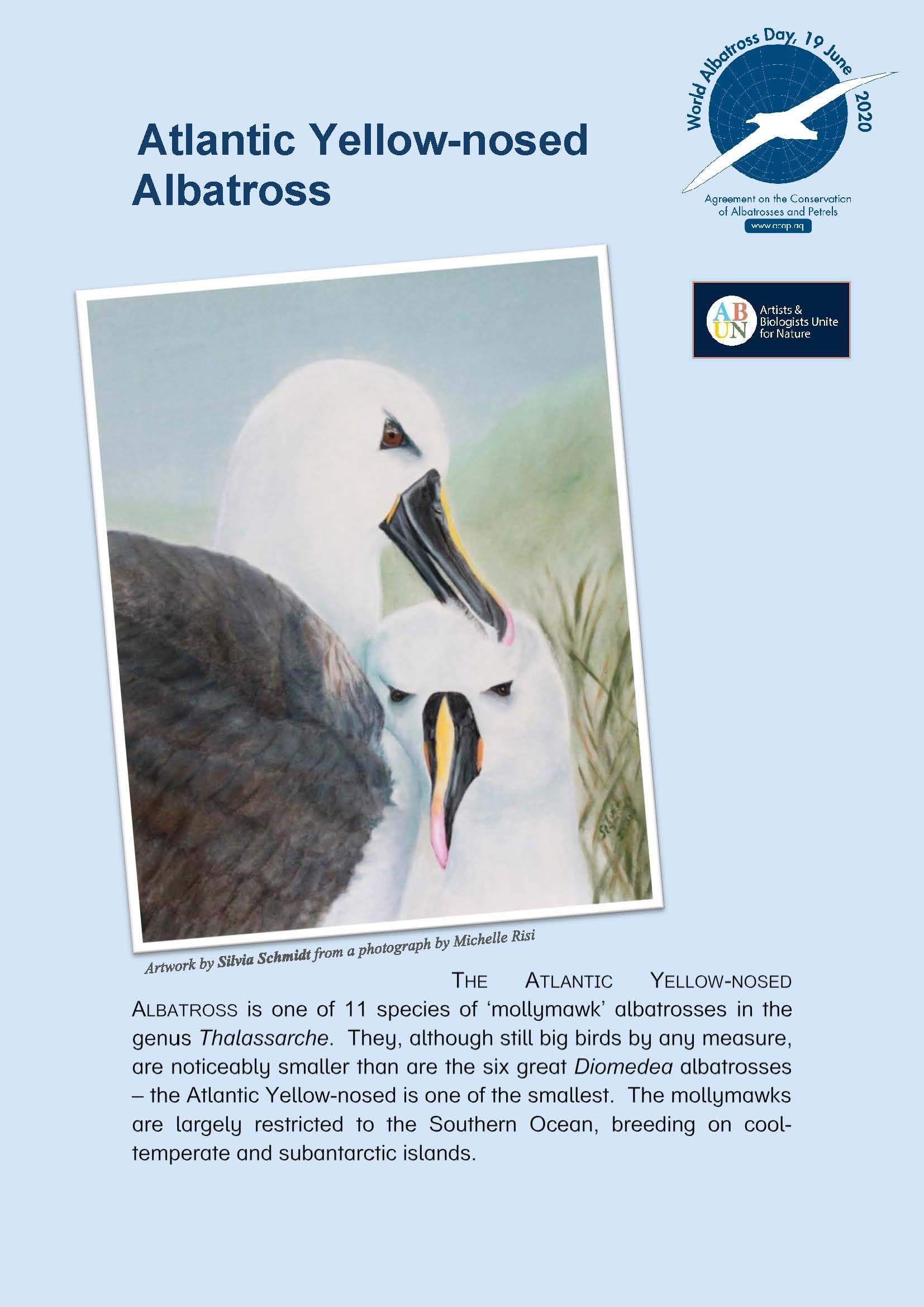 Albatros de pico fino del Atlántico