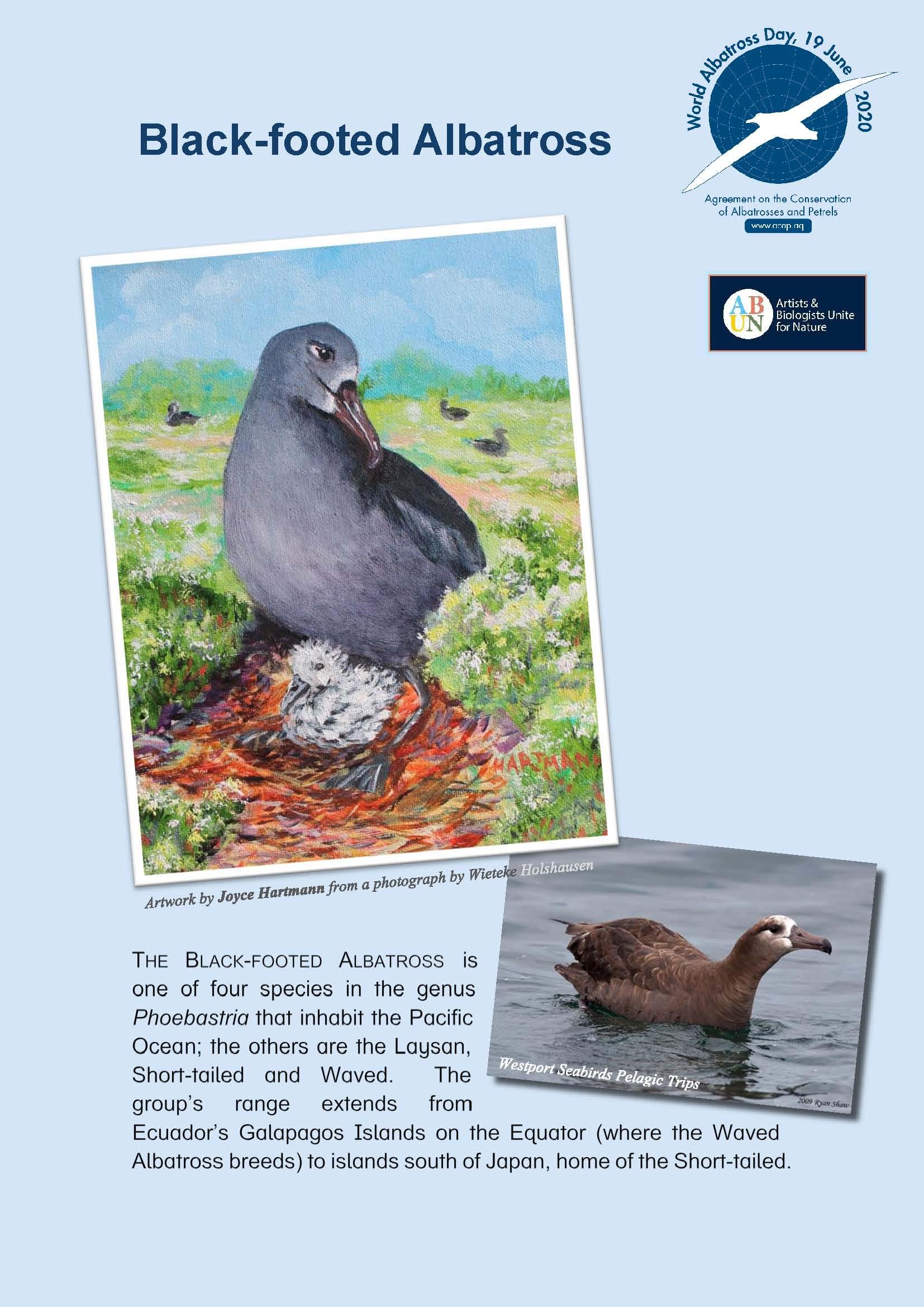 Albatros de Patas Negras