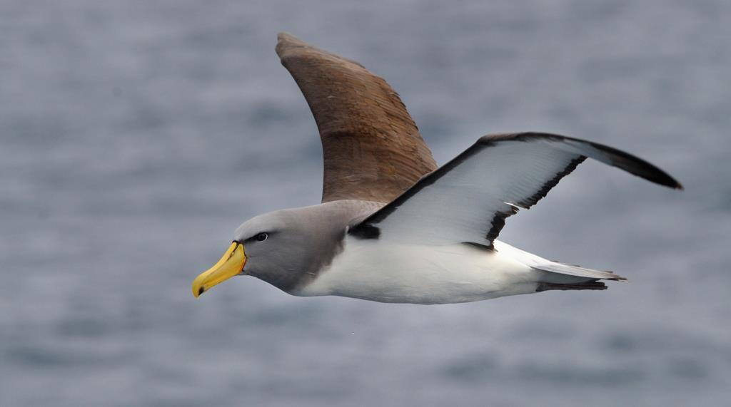 Colouring in Chatham Albatross, Georgia Feild