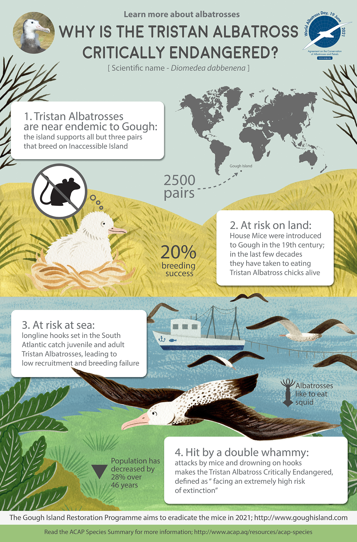 Tristan Albatross infographic