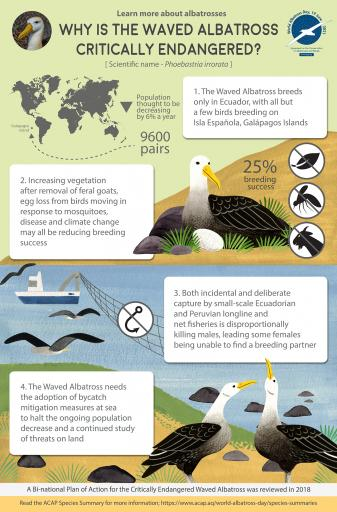 Waved Albatross infographic