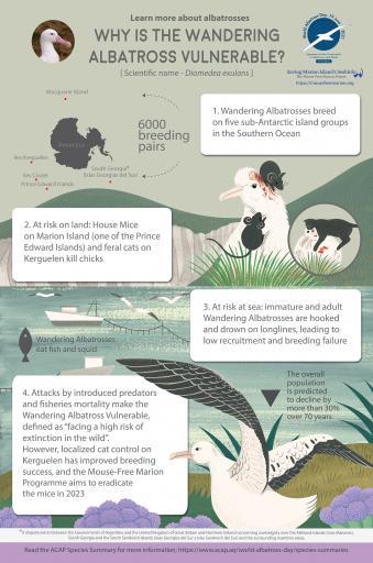 Wandering Albatross infographic